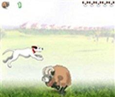 Köpek Koşusu